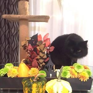 「ハロウィン デコレーション」黒猫編