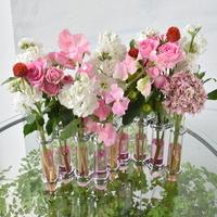 4/24.25.27「ピンクのグラスライン」